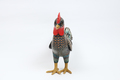 Rooster-009